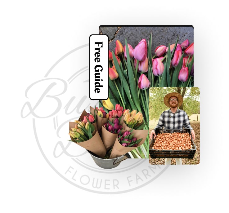 Free Tulip Planting Guide