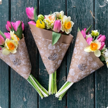 buzzed blooms wrapped tulips